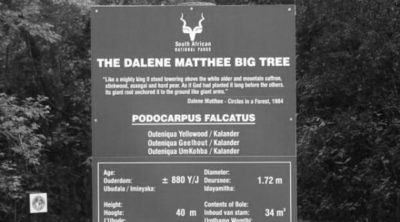 Die Dalene Matthee Big Tree